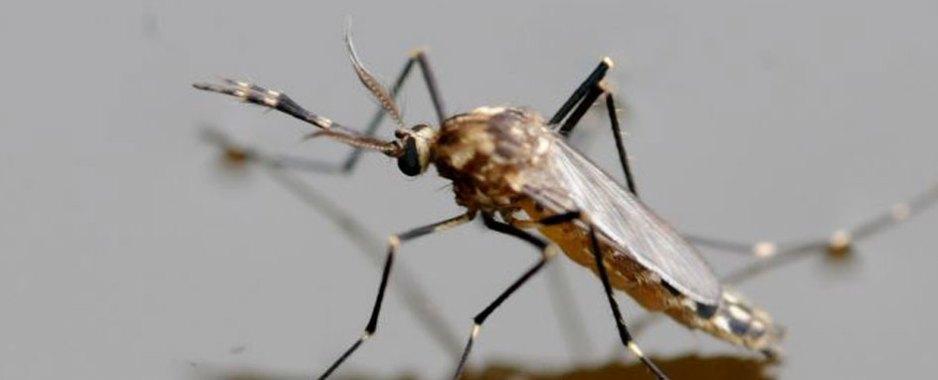 Secretaria de saúde alerta a população para o combate a dengue em Juazeiro