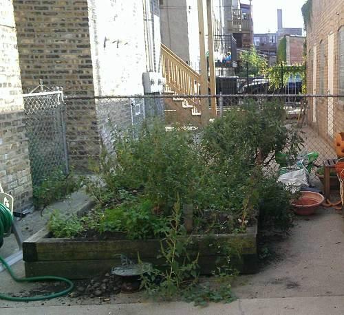 2015-10-11-Garden-Before