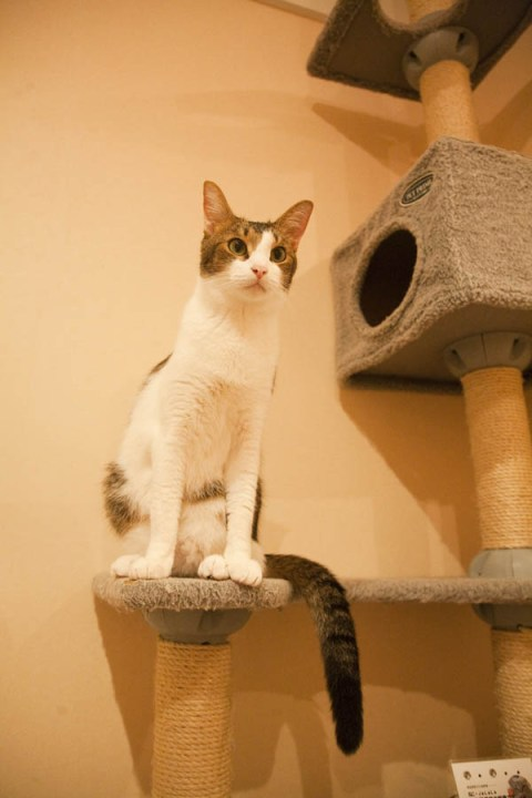 CatCafe036