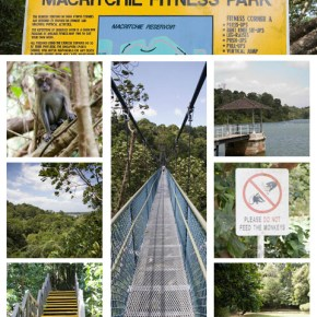 Rainforest Hiking in Singapore at MacRitchie Reservoir Park & Tree Top Walk