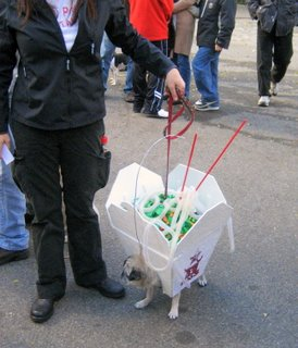 dog dressed as chinese takeout
