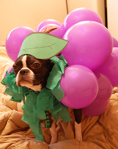 dog dressed as grapes