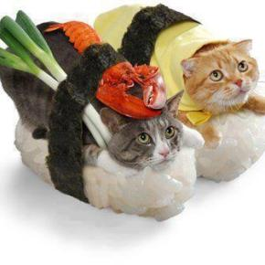 Accidental Funnies - More Japanese Kawaii, Purr-fect Kitty Sushi