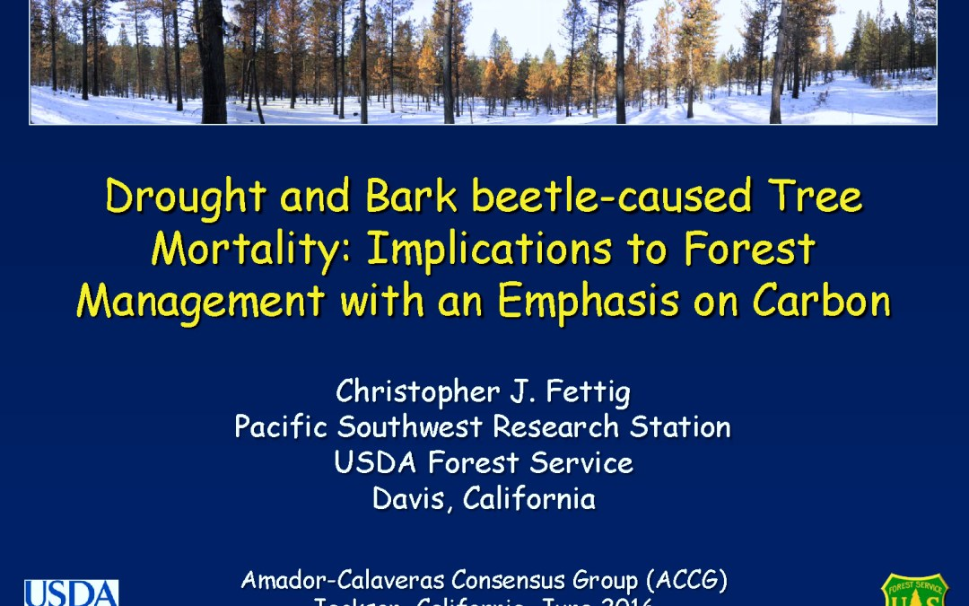 Drought and Bark beetle-caused Tree Mortality – Presentation by Dr. Chris Fettig