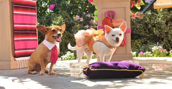 Papi and Chloe in Beverly Hills Chihuahua 3