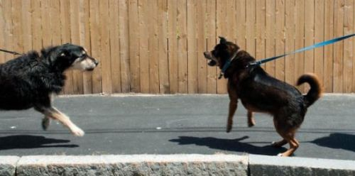 leash reactive dogs