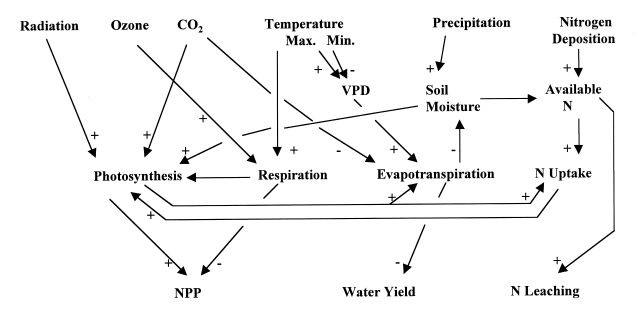 forest diagram carbon sinks