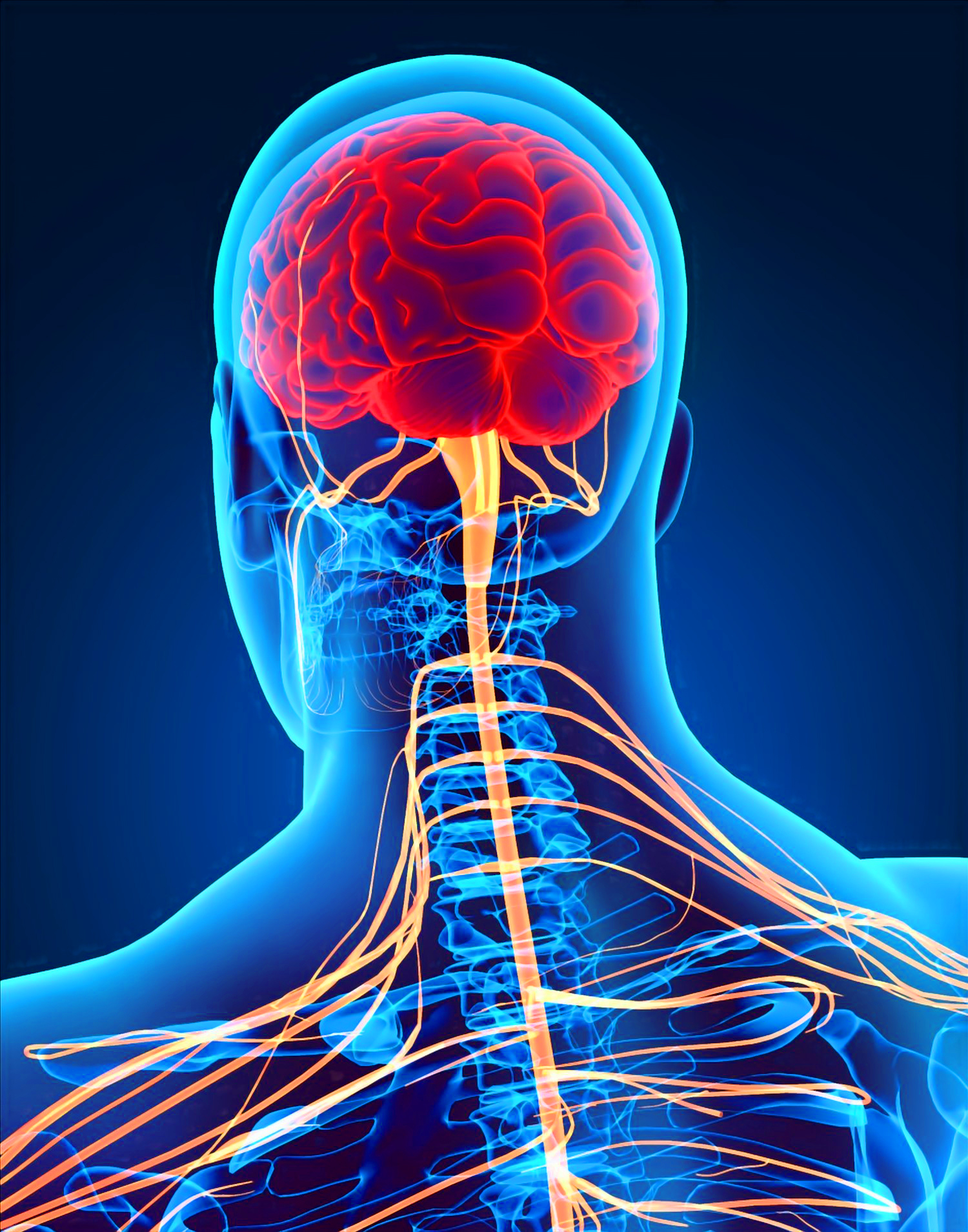 Latest 3d Live Wallpaper The Nervous System Achim