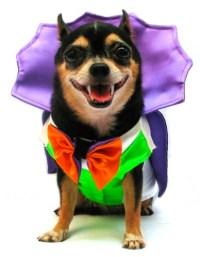 Dog Puppy Costume - Vampire - Dogula - BarkinWoofer