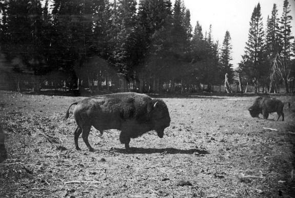 Yellowstone_1890_8