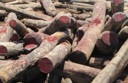 illegal-rosewood-logs-in-madagascar