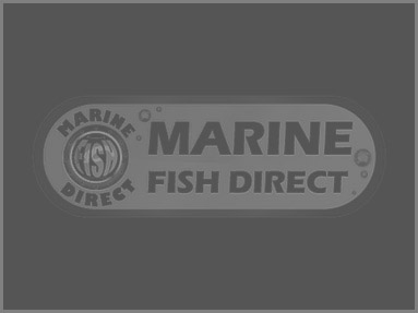 Marine Fish Direct: NSW, Australia
