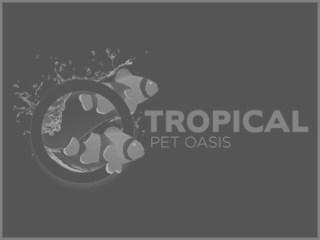 Tropical Pet Oasis: Parker, CO