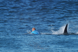 Photos – Mick Fanning Attacked by Shark During JBAY Final