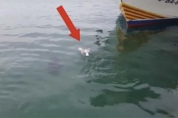 Tuna Swallows, Then Spits Out Live Seagull