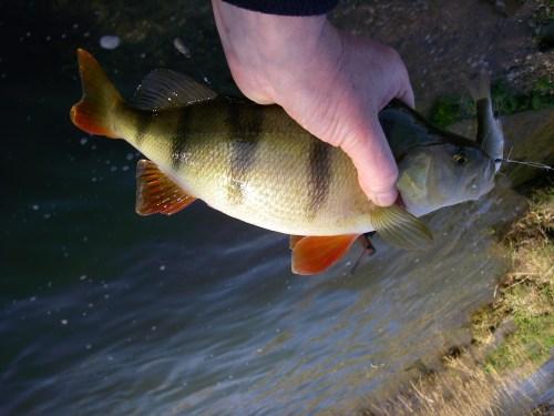 Medium Of How Long Do Fish Live