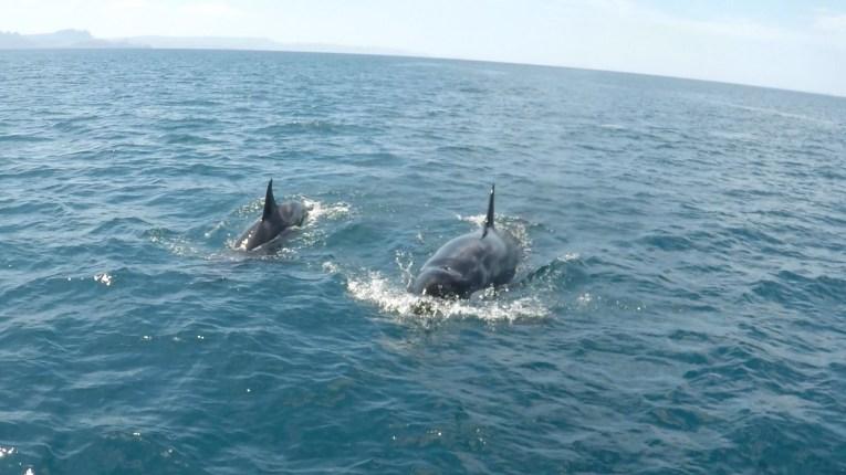 Orca Still