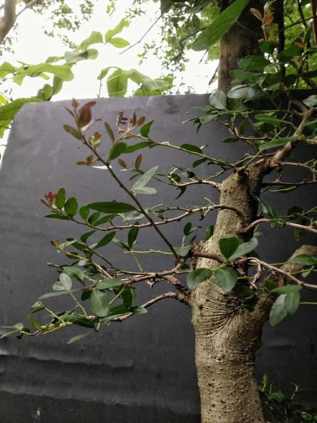 wiring bonsai tips and tricks