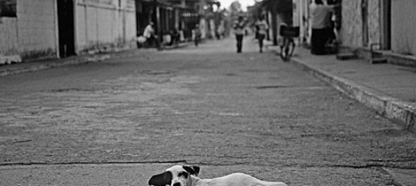 laying-road-dog-bw-big.jpg