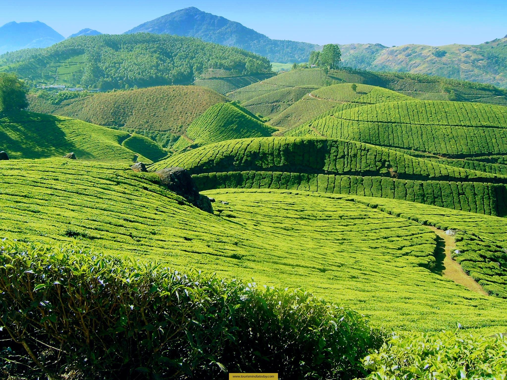 Paragliding Wallpaper Hd Most Famous Tea Plantation Land Munnar Adamseo25