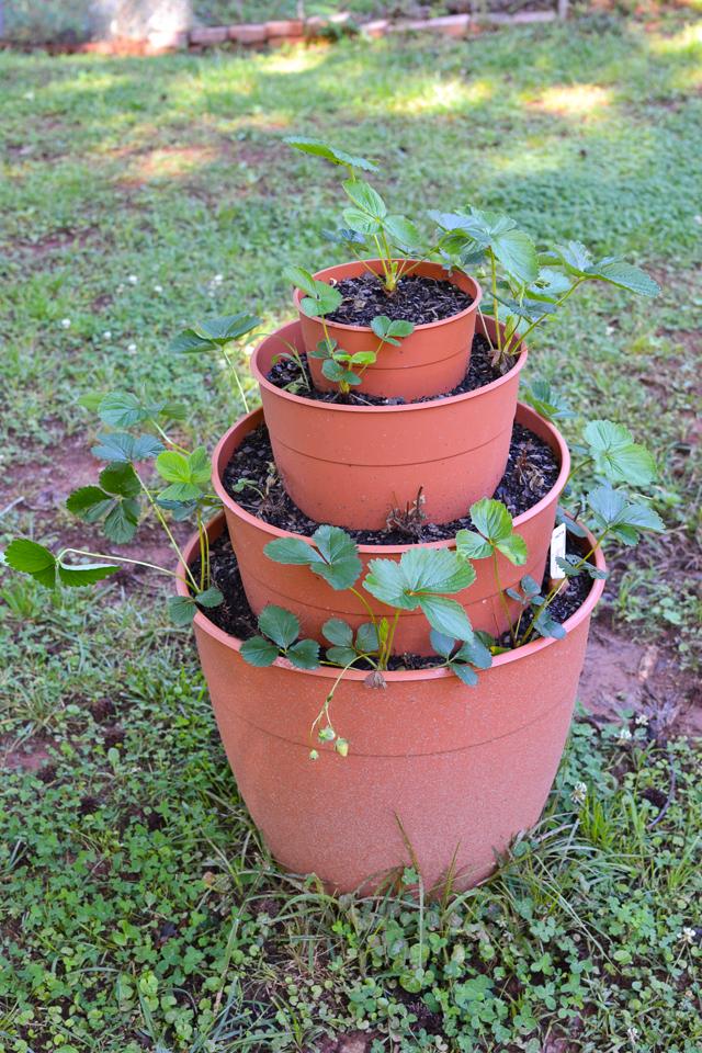 garden update 5.23-1