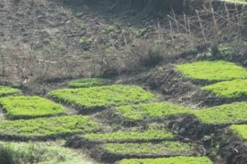 Alebel's small irrigated farmland