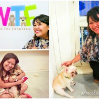 We're The Furballs (Dog Cafe)