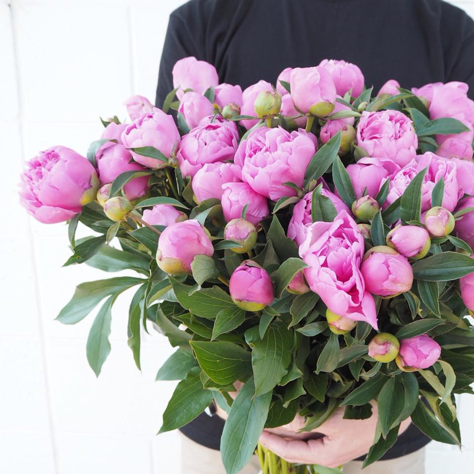 Pianese Flowers The Top 5 Places To Get Your Peonies This Month Adelaide Loves