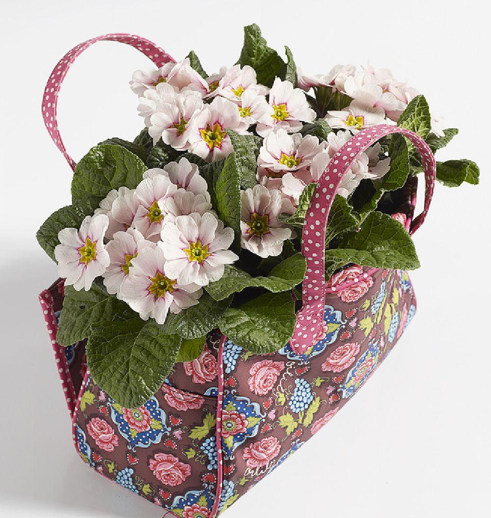 adelaparvu.com despre Primula, Text Carli Marian, Foto Floradania, Primula vulgaris (5)