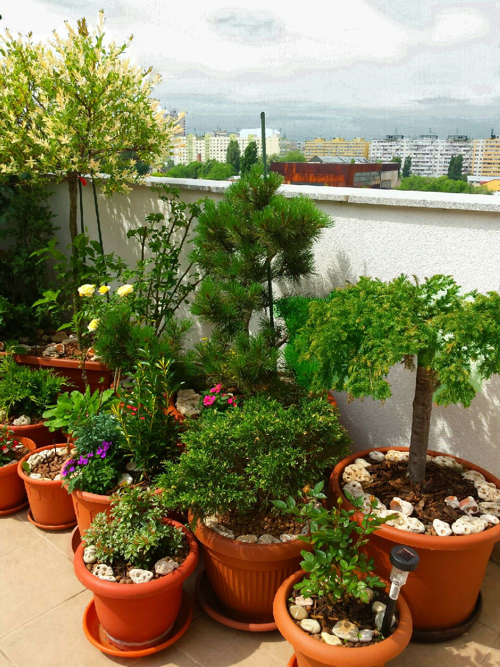 adelaparvu.com despre gradina pe terasa blocului, text Carli Marian, Foto Carli Marian (1)