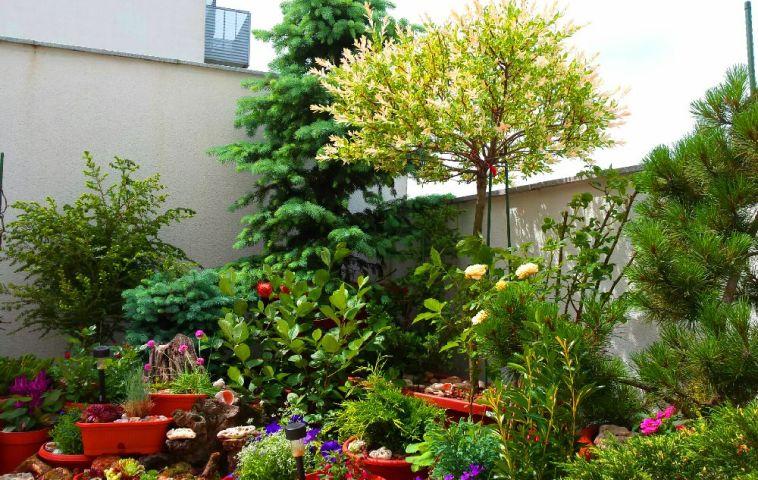 adelaparvu.com despre gradina pe terasa blocului, text Carli Marian, Foto Carli Marian (9)