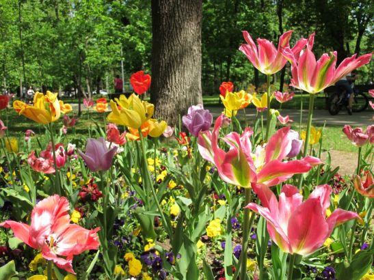 adelaparvu.com despre simbolistica florilor 2