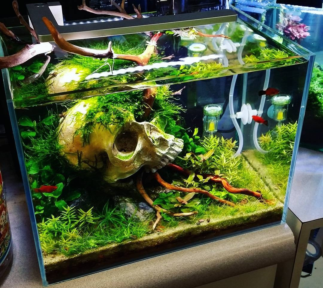 Desain Aquarium Sederhana Aquarium Model Terbaru Living Room Design