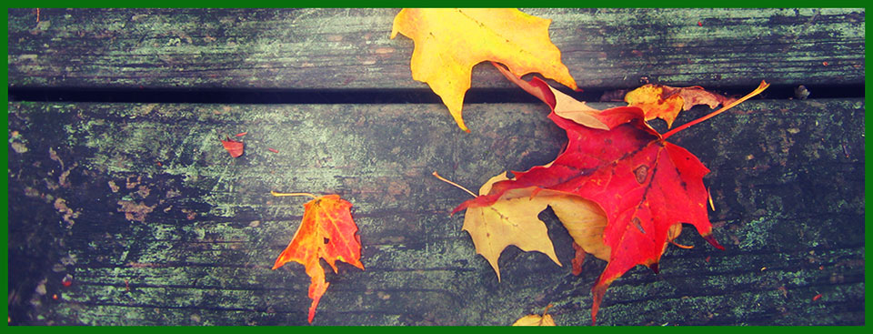 leaves_header_xpro