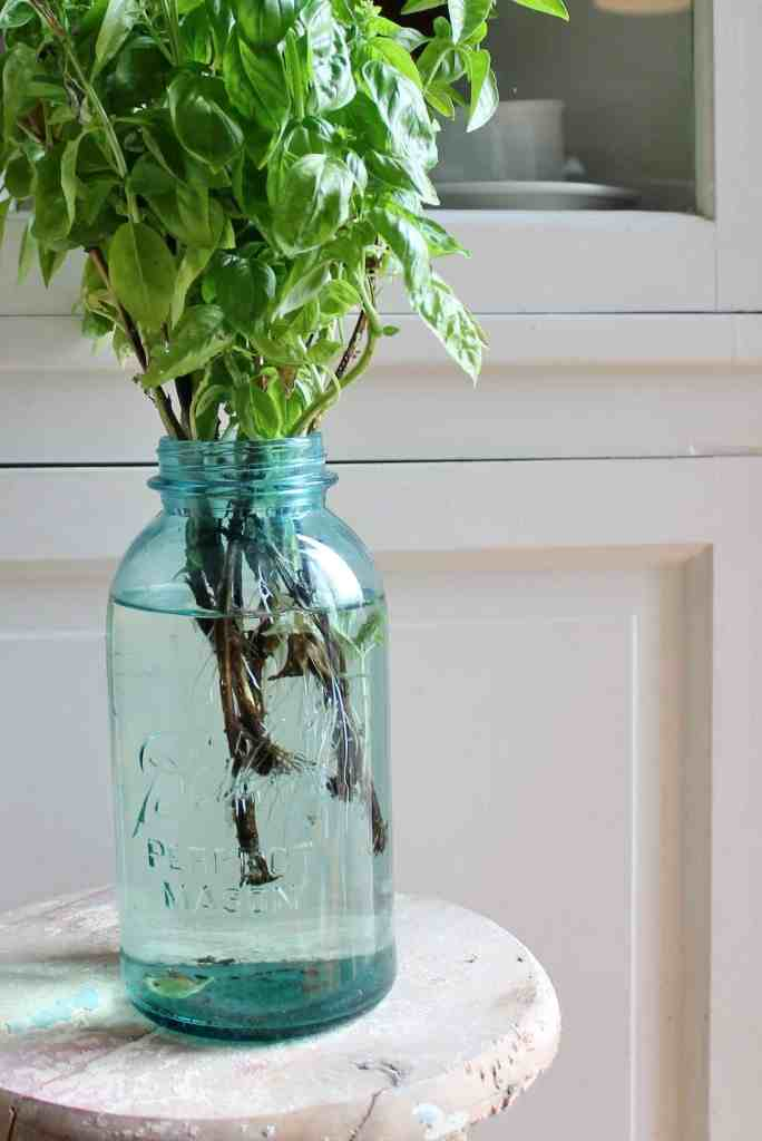 canning jar with basil