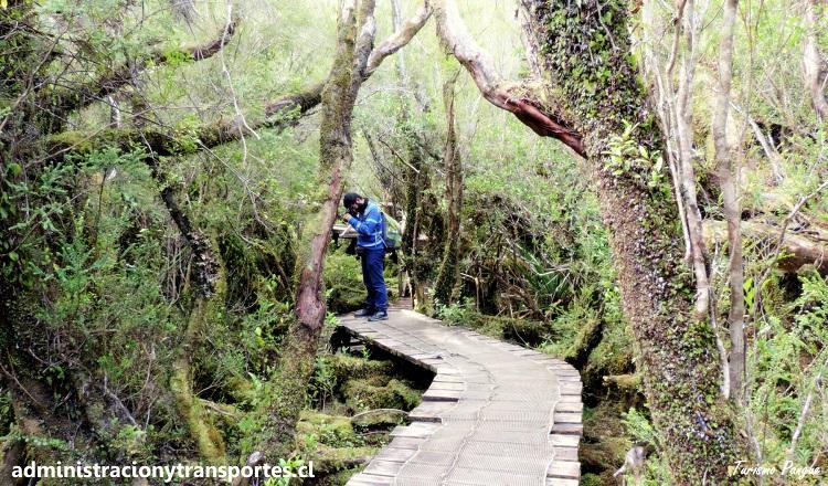 Ariel Cruz Pizarro en Parque Nacional Chiloé
