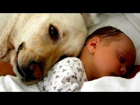Cats and dogs meeting babies for the first time - Cute animal