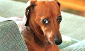 Funny Guilty Dog Videos Compilation 2016
