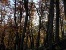 6151_bosque
