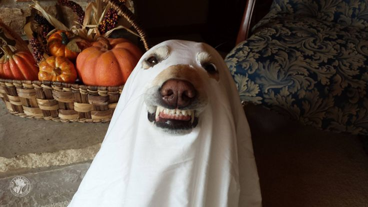 Fall Halloween Wallpaper Top 10 Labrador Halloween Costumes That Are Just Too Cute