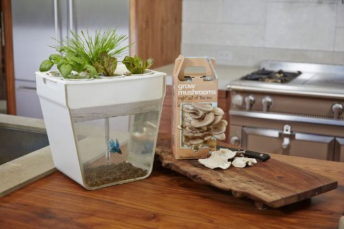 how to clean fish tank at home