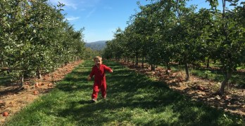 Picking Apples at Indian Creek Orchard, Ithaca, New York