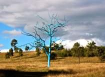 Blue Tree at Mount Annan