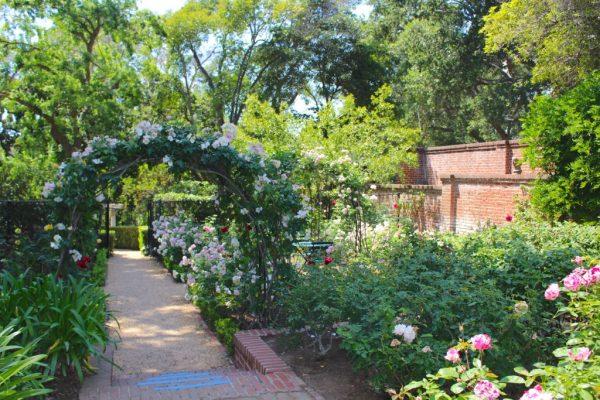 rose garden on the garden tour