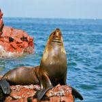 Los tours en Paracas que se pueden hacer y que son muy interesantes son los de las Islas Ballestas y la Reserva Nacional de Paracas.