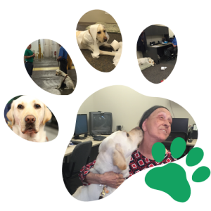 A Paw Imprint made with a collage of Phin Photos