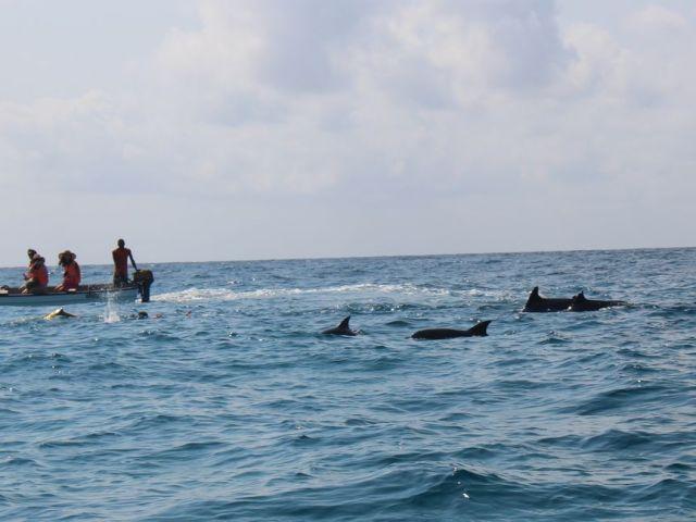 世界の○てまでイッテQ並?!タンザニアのザンジバル島で体験した過酷すぎるイルカツアー!