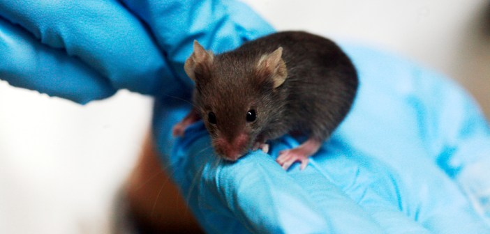 Blind mice see again in a scientific first