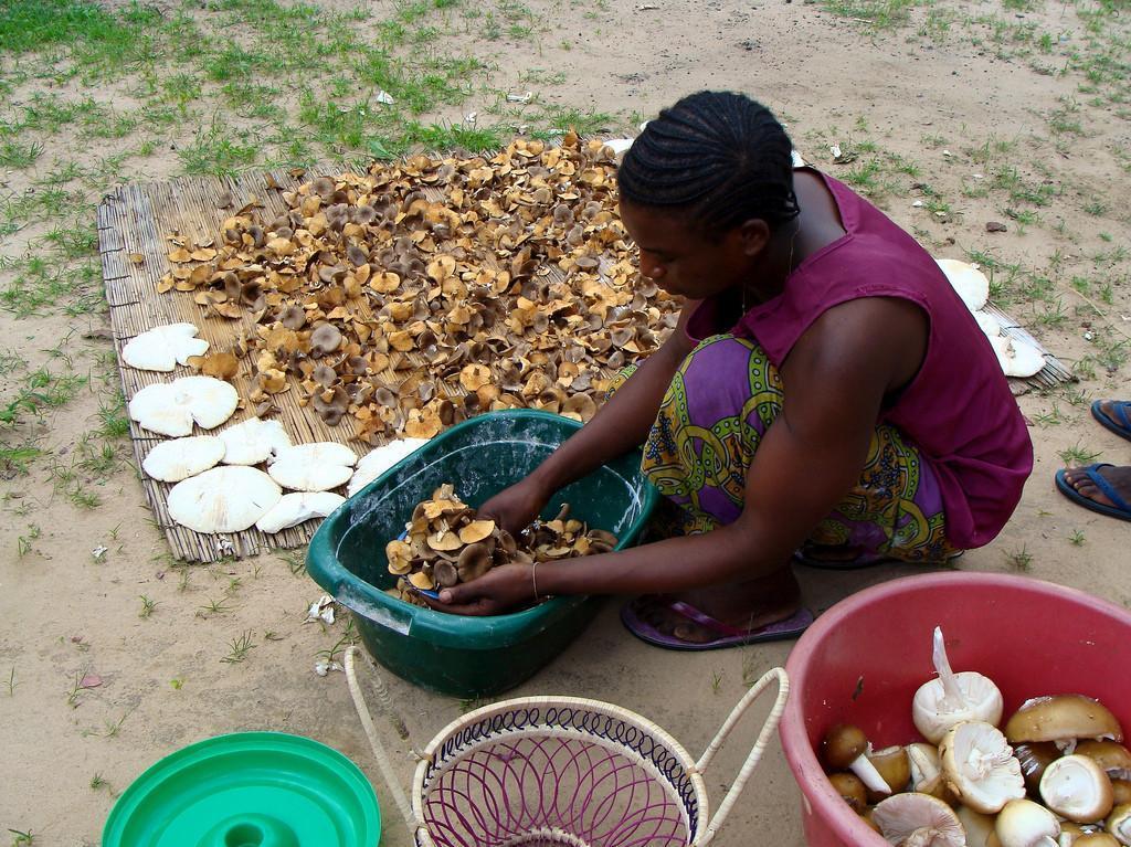 africa-business-mushrooms1-1024x768