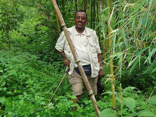 ethiopia_bamboo